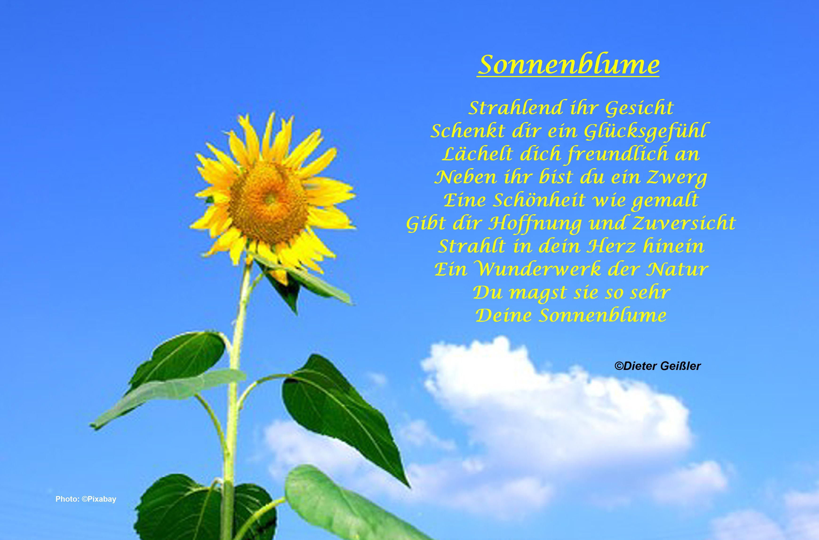 Sonnenblume Gedichte Gedichte über Gefühle